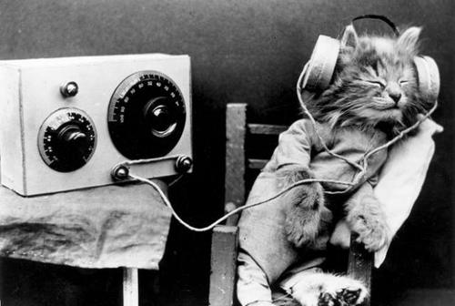 does-your-pet-like-listening-to-music-1.jpg